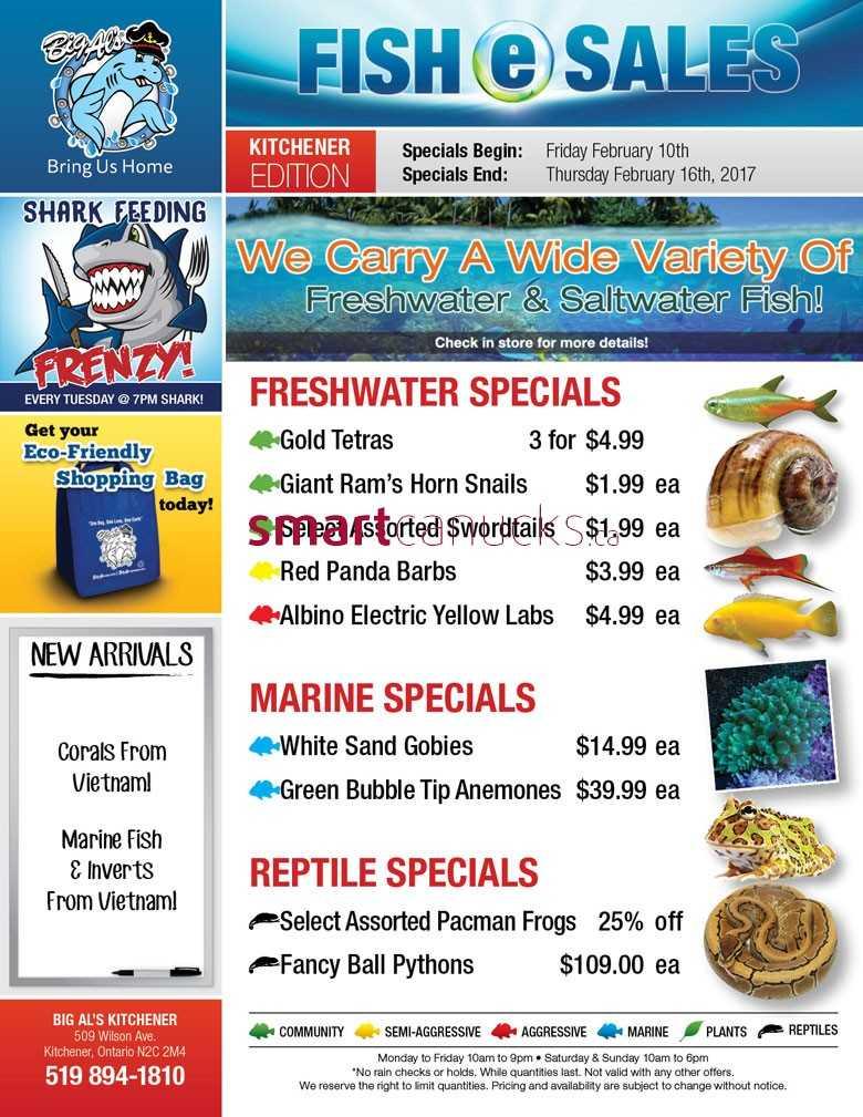 flyers kitchener - Dolap.magnetband.co